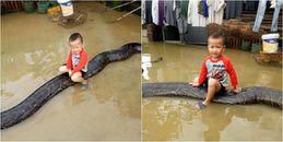 Hoảng hốt hình ảnh cậu bé 3 tuổi cưỡi lên con trăn 80kg trong sân ngập nước