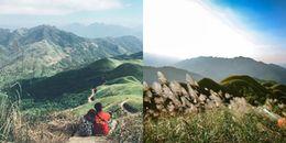 """Giới trẻ phát """"sốt"""" với cánh đồng cỏ lau đẹp như tranh vẽ ở Quảng Ninh"""