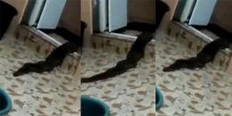 Người dân hoảng hốt khi phát hiện sinh vật kì lạ màu đen, dài gần 2m trườn ra khỏi nhà vệ sinh