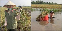 Hàng trăm chiến sĩ công an ngâm mình trong nước gặt lúa giúp dân chạy bão số 11