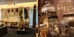 Đỏ mặt khám phá bộ sưu tập 'cậu nhỏ' lớn nhất thế giới ở Iceland