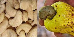 Những hình ảnh thú vị của các loại củ, quả trước khi thu hoạch, nhiều loại sẽ khiến bạn phải bất ngờ