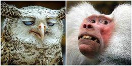 Biểu cảm khó đỡ của động vật khiến bạn không nhịn được cười