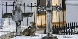 Bí ẩn hàng trăm con mèo hoang ngày đêm canh giữ mộ phần của gia tộc