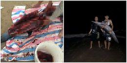Hải Phòng: Kinh hoàng cảnh cá heo trôi dạt vào bờ bị người dân xẻ thịt ở bãi biển Đồ Sơn