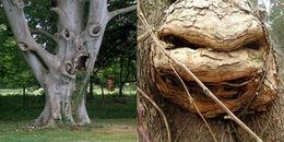 Những hình người kì dị trong rừng và sự thật đằng sau khiến ai cũng phải bất ngờ