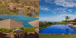 Đã mắt ngắm 17 bể bơi sang chảng nhất hành tinh