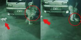 Sau khi tông xe vào cột điện, bà mẹ đánh rơi con nhỏ làm bé xuất huyết não nhưng ôm chó đi bệnh viện