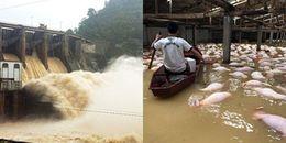 Toàn cảnh trận lũ lụt lịch sử: Đau xót trước những con số thống kê khủng khiếp