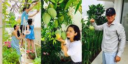 yan.vn - tin sao, ngôi sao - Ngất ngây trước khu vườn xanh mướt trong căn nhà tiền tỷ của sao Việt