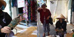 Sau bão, người dân tỉnh Khánh Hoà buồn bã mang tôm hùm vào TP.HCM bán giá rẻ