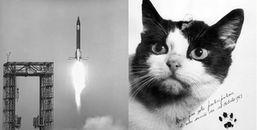 Cô mèo đầu tiên sống sót trở về từ vũ trụ: bị mổ não và buộc phải 'chết nhân đạo'
