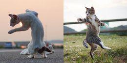 Mèo hiệp khách - Võ vẽ còn chất hơn cả Diệp Vấn thế này thì Sen đổ dài dài thôi Boss ơi!