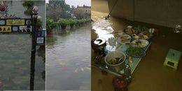 Mưa lũ ngập sâu khiến cá bơi lội 'tham quan' ngay tại khu vực Đại Nội ở Hoàng Cung Huế