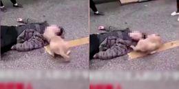 Không tin rằng chủ đã chết, chú chó cố gắng đánh thức người đàn ông đang nằm bên đường