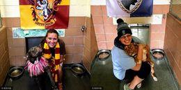 Các tín đồ của Harry Potter đâu rồi, đã có phiên bản trường Hogwarts dành cho chó cưng đây này!
