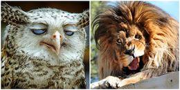 Top 20 loài động vật bị dìm hàng không thương tiếc khi chụp ảnh, thấy mà thương thật sự!