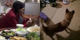 Cười ra nước mắt chuyện mẹ vô tư bón cơm cho cún mặc kệ con gái ngồi bên ganh tị