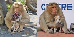 Cảm động tình mẫu tử giữa chú chó hoang và một con khỉ, thế mới thấy động vật tình cảm cỡ nào!