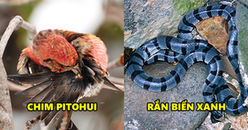 Dễ thương và nhỏ nhắn, thế nhưng chỉ cần chạm nhẹ vào 5 sinh vật này là mất mạng như chơi