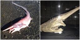 'Thủy quái' giống cá mập nhưng lại có tới 2 cái mồm, rốt cuộc 'Đây là đâu, con này là con gì thế?'