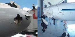 Bạn nghĩ chim trời không thể làm thủng vỏ máy bay, ấy là đã nhầm to rồi nhé!