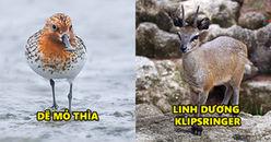 7 loài động kì lạ nhưng lại có vẻ ngoài ngộ nghĩnh và đáng yêu nhất quả đất