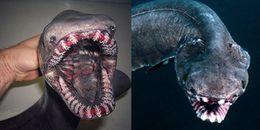 Chạm trán thủy quái thân dài như rắn, miệng tua tủa 300 răng nhọn ngoài khơi Bồ Đào Nha
