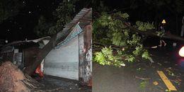 TP. HCM: Mưa lớn hàng loạt cây xanh bật gốc đổ đè vào nhà dân, nhiều nhà bị tốc mái