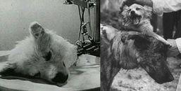 Ghép đầu động vật và những thí nghiệm vô nhân đạo, rùng rợn nhất lịch sử nhân loại