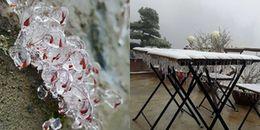 Đỉnh Fansipan đã xuất hiện băng giá, cây cối và hoa cỏ đều đóng băng