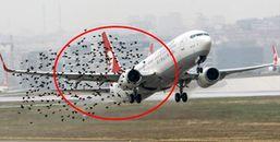 Chim đâm vào động cơ máy bay, sự thật không nguy hiểm như những gì thấy trên phim