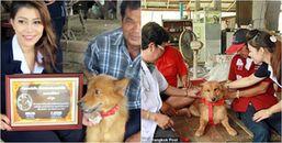 Chó đúng là bạn của con người mà, chú chó này đã cứu mạng em bé sơ sinh bị bỏ lại ở bãi rác