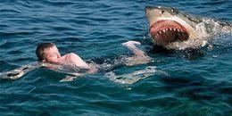 Không ngờ nhờ cách đấm lia lịa vào con cá mập, mà chàng trai này đã thoát chết