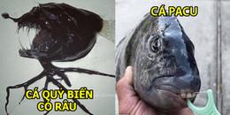 Rùng mình trước bộ ảnh 'quái vật đại dương', thật sự không tin nổi có những loài như này dưới biển