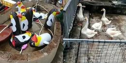 Bỏ hơn 350 ngàn đồng chỉ để ngắm chim cánh cụt bơm hơi, du khách phẫn nộ với sở thú