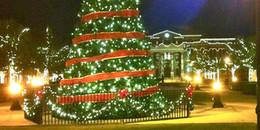 Có bao giờ bạn tự hỏi: Tại sao lễ Giáng sinh phải có cây Noel?