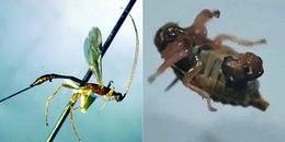 Rùng mình loài ký sinh trên con ong không khác gì phim kinh dị