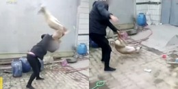 Phẫn nộ gã chủ độc ác đánh chú chó đáng thương đến chết vì thua cược đua chó