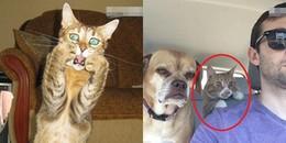 Loạt ảnh chứng minh mèo là loài động vật 'diễn sâu làm màu' nhất trên đời này
