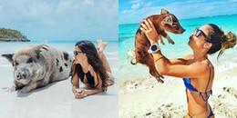 Bơi cùng những chú heo tinh nghịch giữa thiên đường Big Major Cay