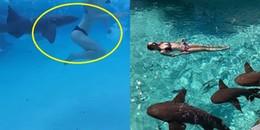 Vô tư nô đùa cùng đàn cá mập dưới biển, cô gái bất ngờ bị chúng tấn công