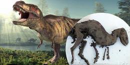 Tìm thấy xác ướp giống khủng long đã tuyệt chủng từ 65 triệu năm trước, vẫn còn nguyên xương thịt