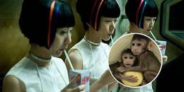 Trung Quốc nhân bản thành công đôi khỉ, nỗi lo về nhân bản người lại trỗi dậy