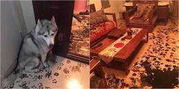 Biết Tết con chó sắp tới, 'boss' rắp tâm biến nhà của 'sen' phủ đầy dấu chân để hợp 'phong thủy'