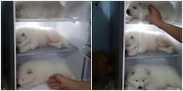 Chàng trai Việt Nam lên báo nước ngoài vì cho 3 chú cún cưng vào tủ lạnh tránh nóng