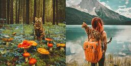 Gặp gỡ cô mèo nổi tiếng nhất Instagram và hành trình phiêu lưu khiến giới trẻ phát cuồng
