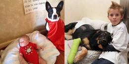 Đây chính là những chú chó dũng cảm nhất hành tinh, sẵn sàng hy sinh thân mình để cứu chủ nhân