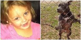 Kinh hoàng bé gái 3 tuổi bị chó Pitbull cắn đến chết chỉ vài ngày sau khi bố em mang nó về nhà