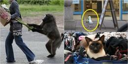 Chẳng ai ngờ rằng, những con vật siêu đáng yêu này lại là... 'tội phạm' khét tiếng